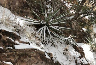 Window Rock hike, March 18